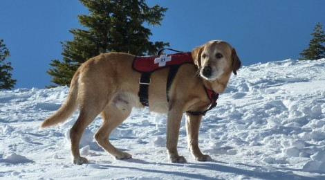 An Avalanche dog at Breck.