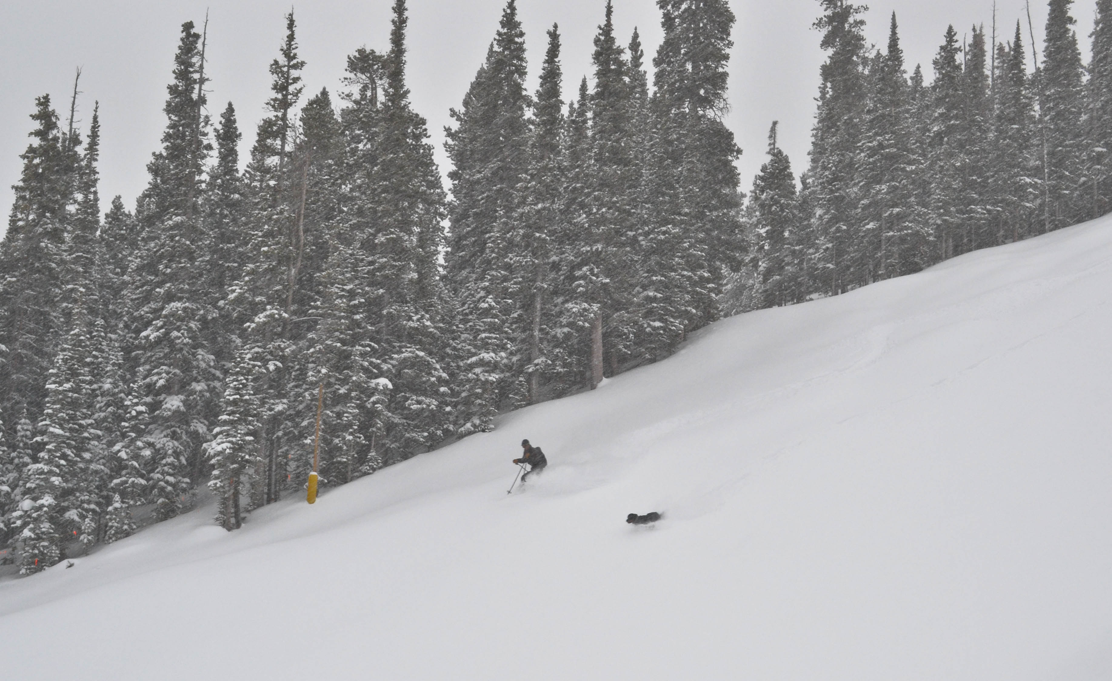 Anonymous skier