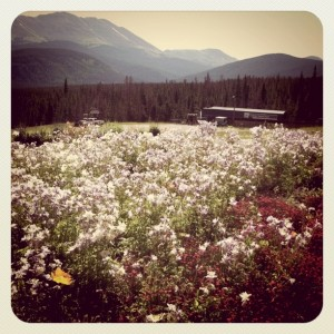 8 best wildflower hikes near Breck (3)