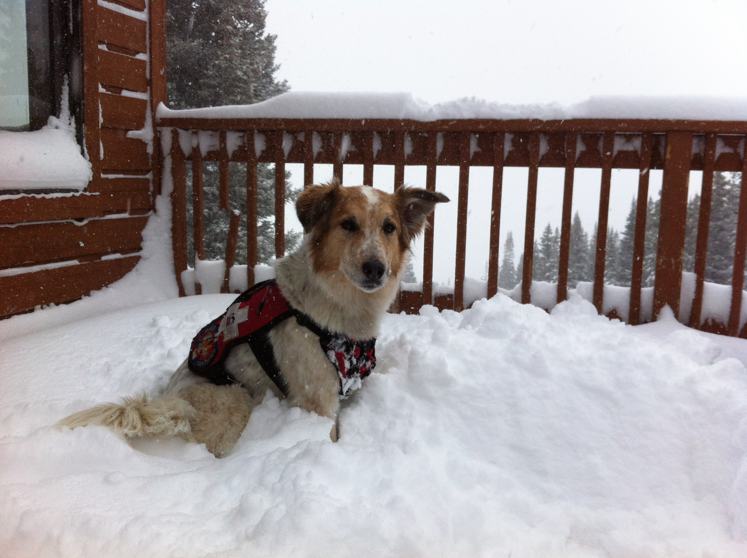 Tali the patrol dog enjoys the fresh snow on Dec. 18.