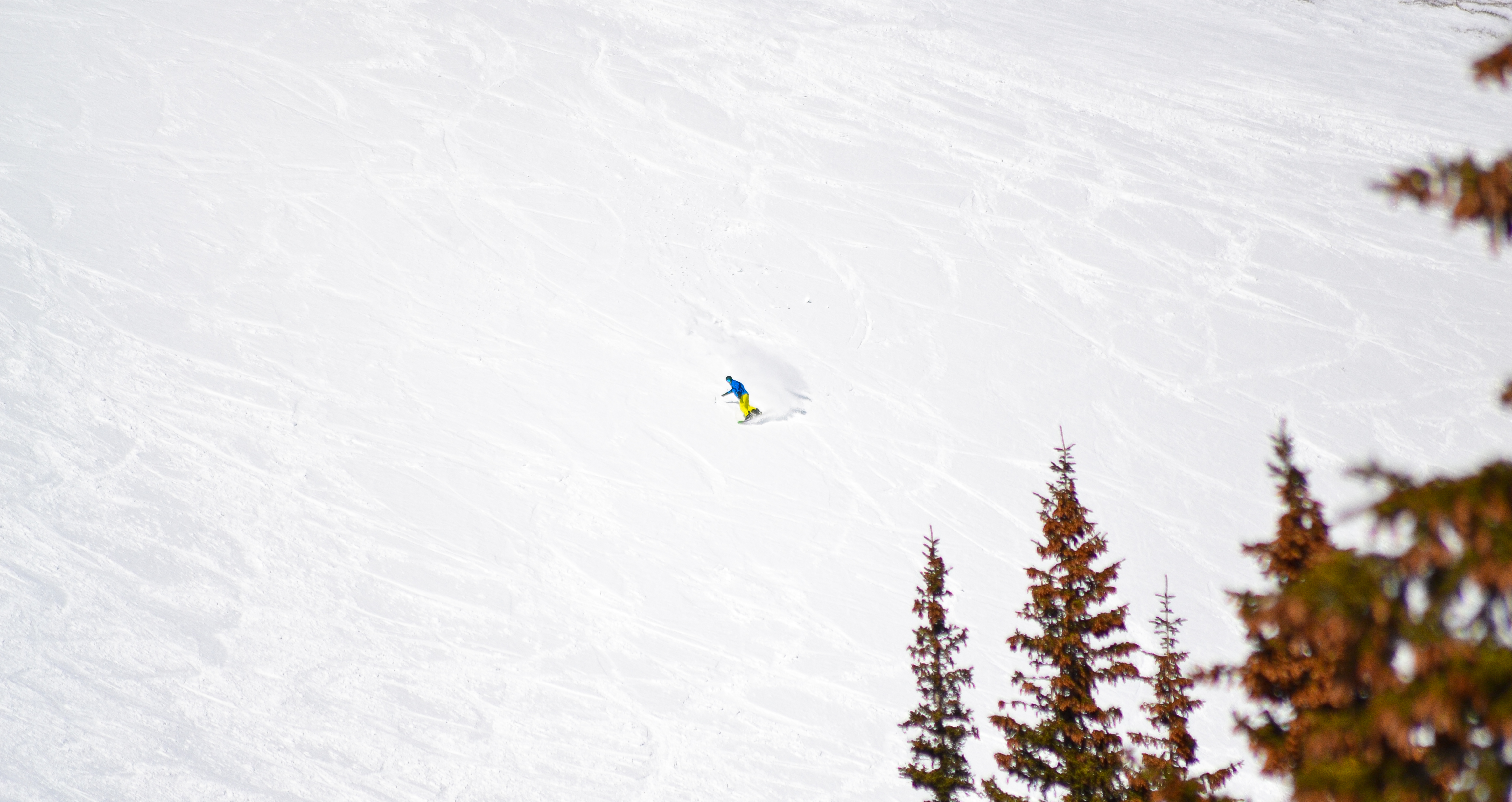 A lone snowboarder gets fresh tracks on Horseshoe Bowl